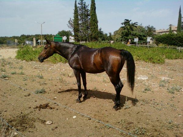 Stage d'équitation intensif à Méjannes le clap du 19 au 24 Aout