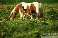 Unwritten / Wild Horses (2009)
