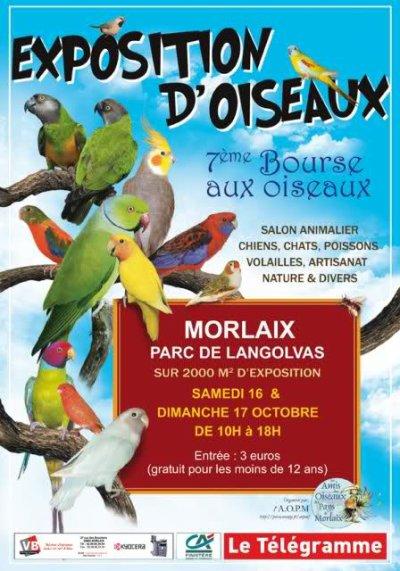Exposition d'oiseaux à Morlaix.