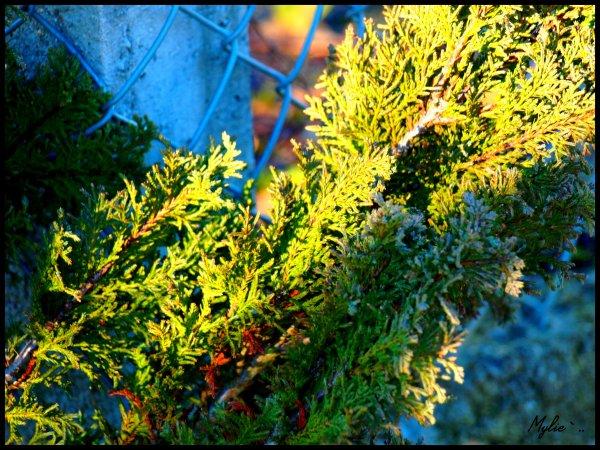 Nature` ..