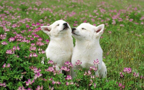 Deux chiens qui profitent du beau temps