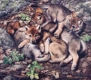 Tu et angoissé petite loup