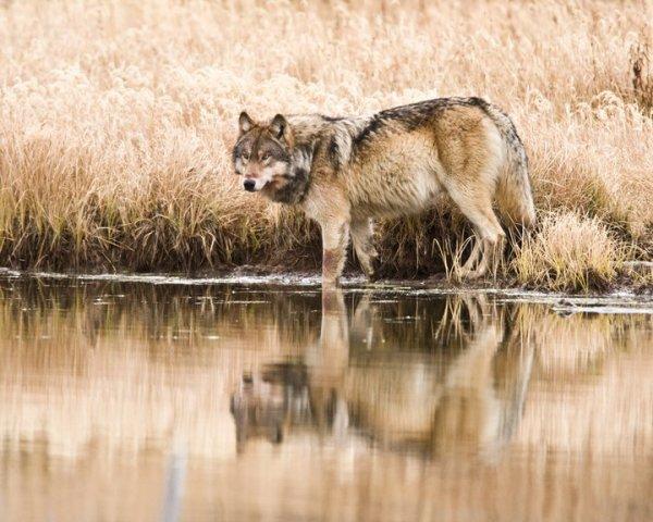 Je suis aussi positionné  des loup et aussi loin de se monde