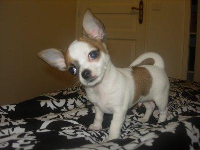 Et voilà Enzo à 2 mois, il pèse 760gr, un vrai petit amour
