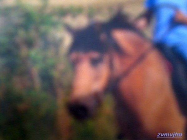 Mon poney d'or ♥