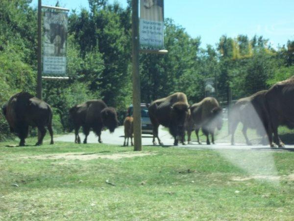 vacances d'été en Ardèche