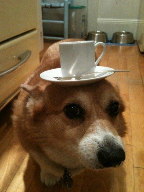 Un chien trop mignon avec une tasse sur la tête!