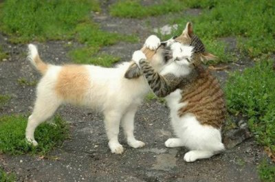 l'amour!!!!!!!!!!!