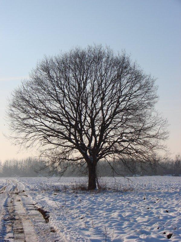 La neige : quelques photos de janvier 2011