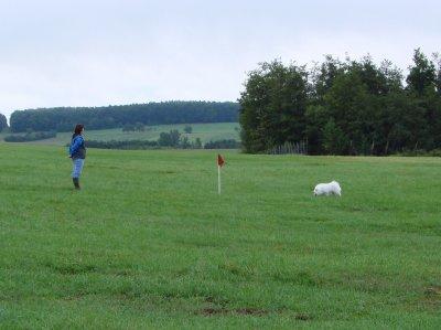 Concours de pistage français au TCC Ingwiller le 27/08/2011
