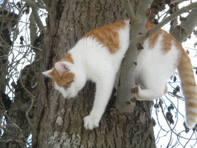 le chat de Samia(CARAMEL)