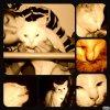 Bouda-mon-chat