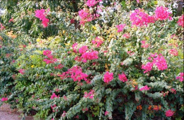 Bouquets Djiboutiens.