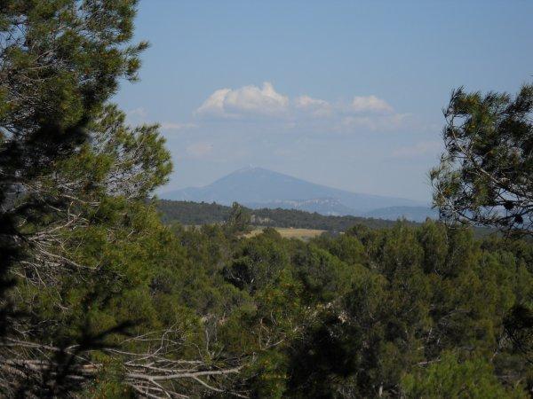 Le mont Ventoux, les dentelles de Montmirail dans la brune depuis un bois.