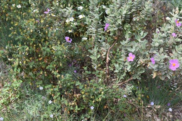 Fleurs sauvages des bois........