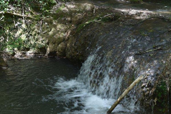 Car dans le bois coule un ruisseau........
