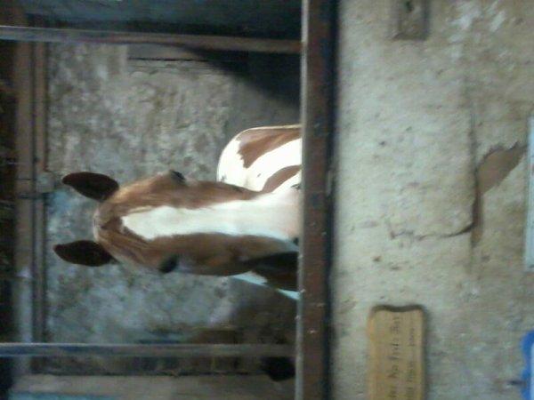 Presentation de quelques chevaux ...