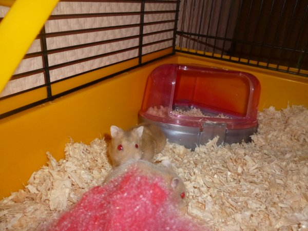 mes hamster kent et kennia
