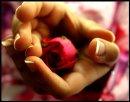 Photo de reve-rose18