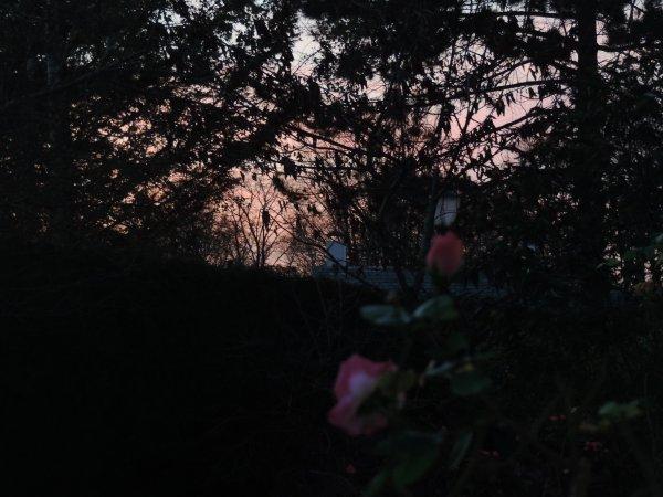 Roses de part chez moi