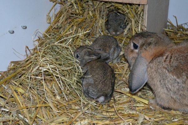 jonge konijntjes