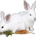 Pour un sale bonhomme qui n arrete pas de poser des lapins