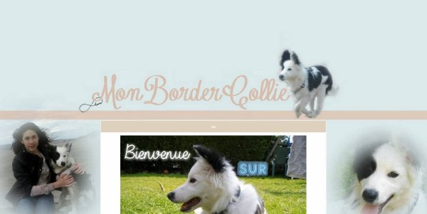 Mon-border-collie