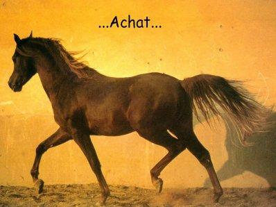 L'Achat d'un cheval.