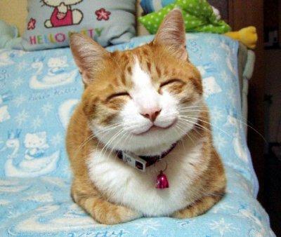 """Résultat de recherche d'images pour """"chaton smiley"""""""