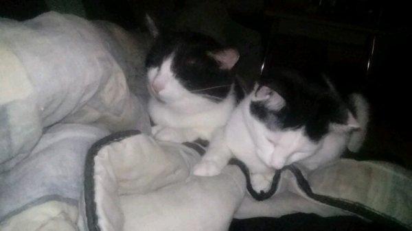 Mes chats Jupiter et Mercure