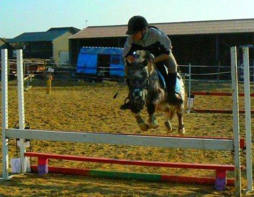 Parce que mon poney il fait a peine 1m2o, il a 6 ans, il est trop gros, il voi presque plus de l'oeil droit, il se retrouve dans une épreuve avec que des chevaux en 7o cm & il arrive quand même a m'offire une putain de 7èm place .