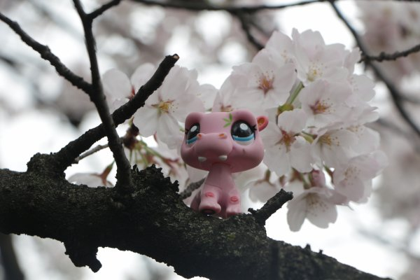 www. Cherry Blossom asiatique datant Sims 3 messages de rencontre en ligne
