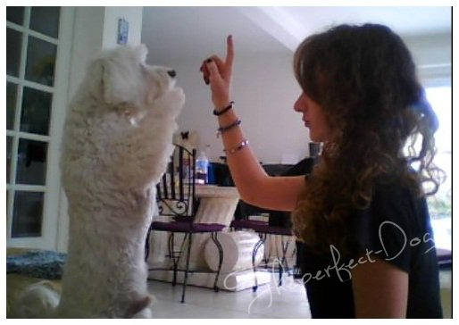 THEPERFECT-DOG ! ♥