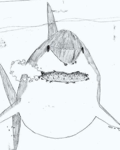 Requin blanc dessins fait a l 39 arrache - Coloriage grand requin blanc ...