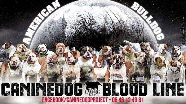 Caninedogproject
