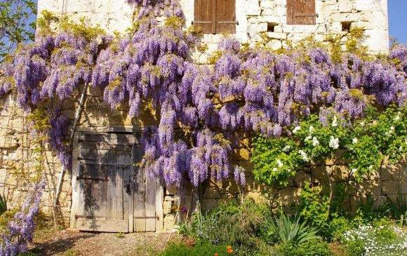 Le coin jardin d'Aurélien n°8 Les plantes grimpantes