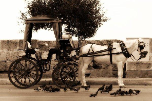 ROMANCE A MALTE : TUNIS.