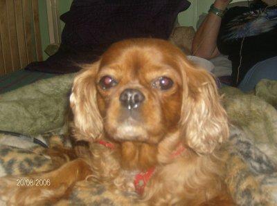 19 octobre 2010 Evoly est dcd à l'age de 10ans:jour de cauchemar...pour toi et moi...tu me manques beaucoup