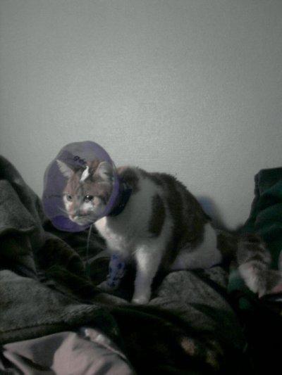 Aujourd'hui Moustique est rentré à la maison :10/11/2010