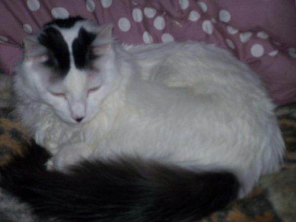 Début d'année très difficile pour les amoureux des chats....