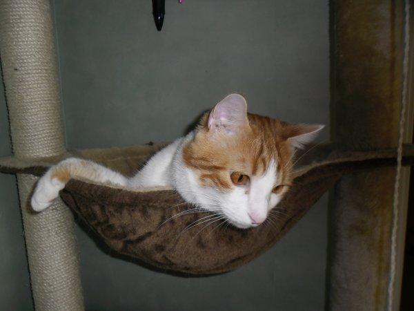 Moustique, un chat magnifique...dans son arbre à chat