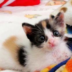 La belle histoire de Monday, un chaton abandonné sauvé par son ange gardien