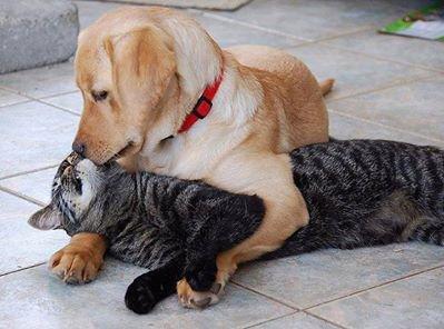 """""""Les animaux d'une même espèce ne luttent jamais à mort ; le vainqueur épargne le vaincu. L'espèce humaine est privée de cette protection."""" - René Girard"""