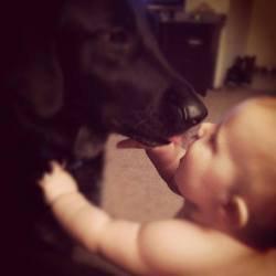 Un chien sauve son petit Maître maltraité par sa baby-sitter