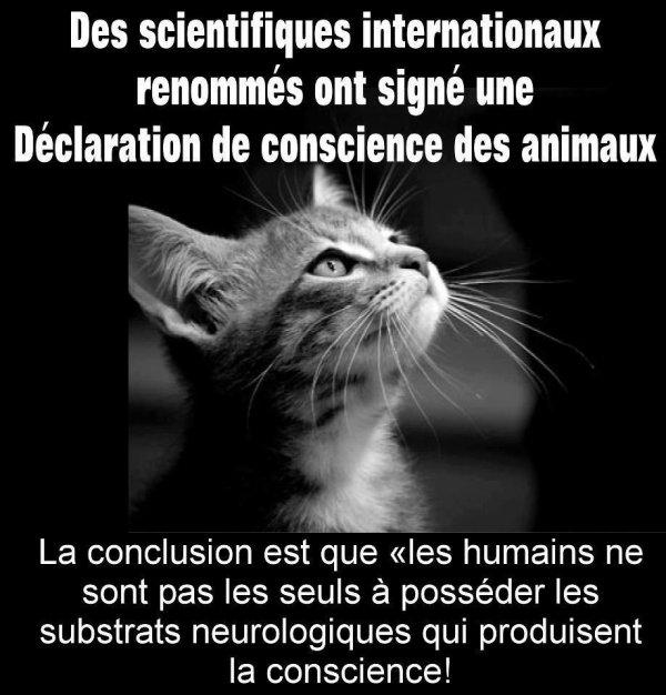 Les Animaux aussi ont une conscience