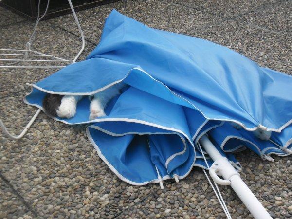 Mooky et le Parasol : l'autre façon de s'en servir? depuis son opération il est en super forme...