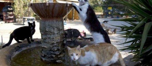 Héros d'une légende de l'île, les chats sont choyés comme dans ce sanctuaire.