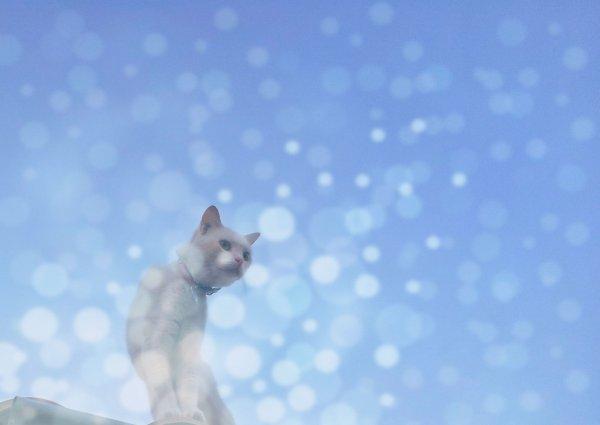 Une légende peu connue: le Chat du Paradis