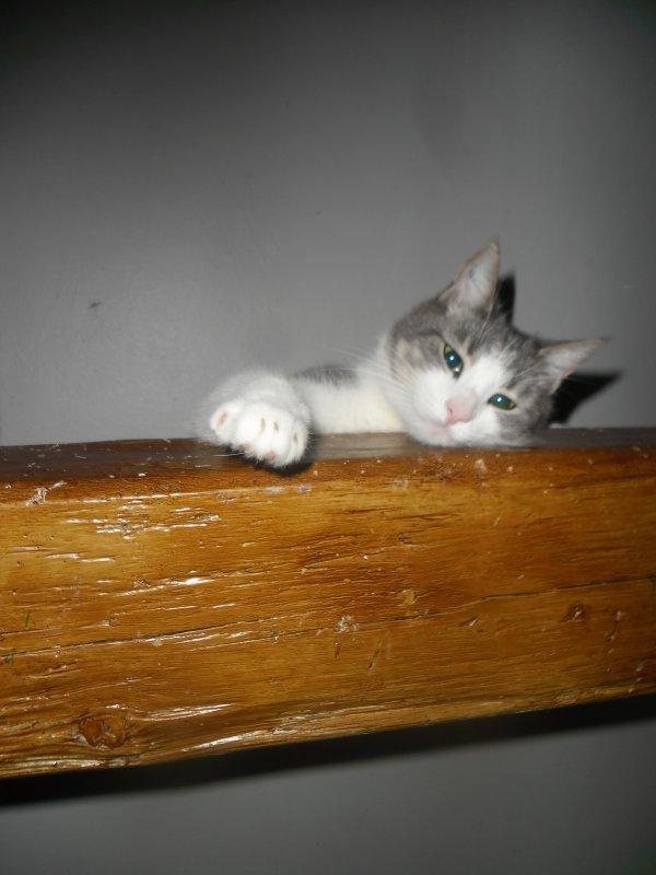 Hubert, petit doudou d'amour (2ans), est toujours chez moi mais j'ai eu des arguments de taille: il va s'ennuyer tout seul et on ne peut pas le séparer de ses nombreux papas!