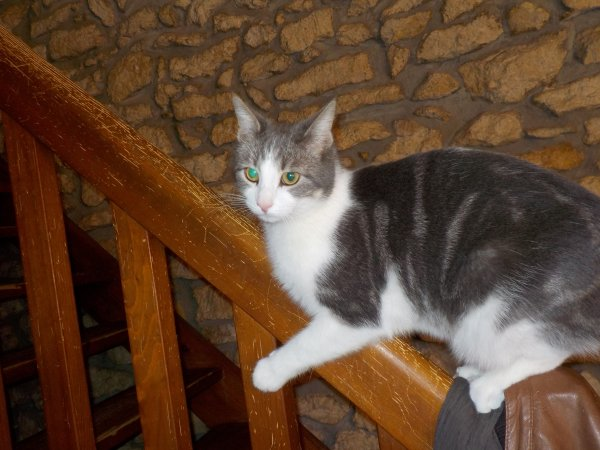 Hubert, 2ans....le Chat'pitre 7 de ma bande....